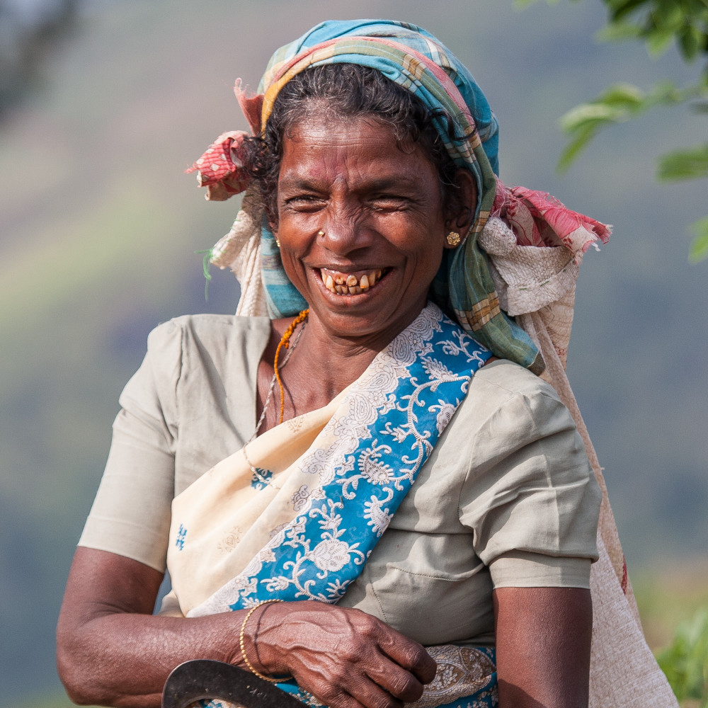 Tea picker 2