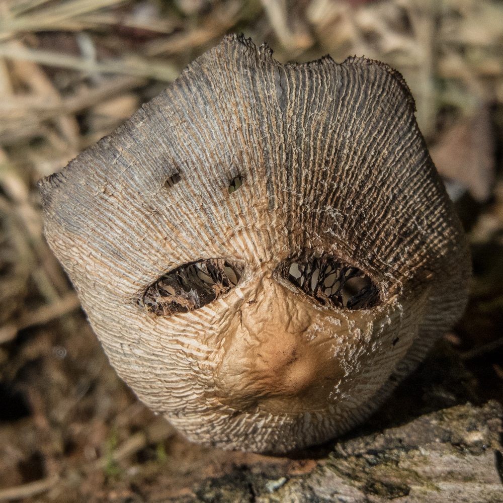 hedgehog head mask mushroom